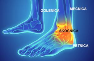 Bolečine v gležnju ( anatomija gležnja )